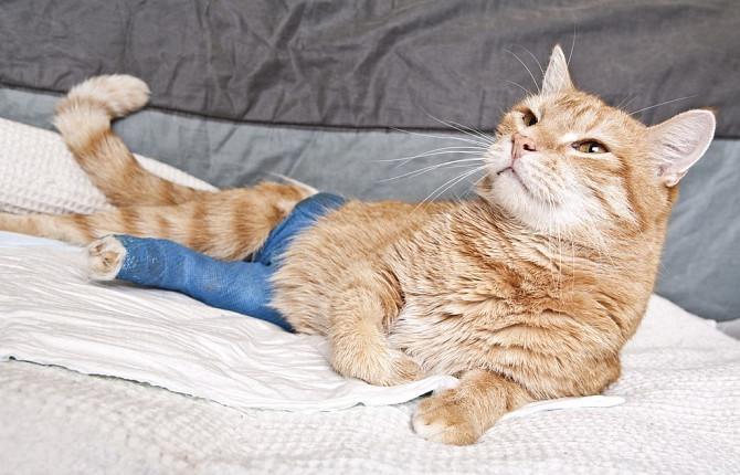 лечение травмы у кошки