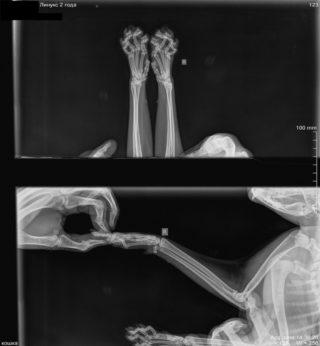 рентген для кошки