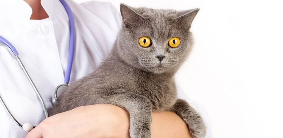 МРТ кошке
